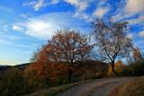 sous le ciel bleu de novembre.