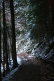 la forêt sombre.