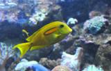 Pretty Yellow-Green Fish