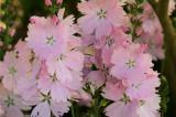 Perennial.jpg