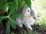 Resident rabbit Twitch