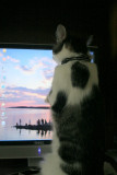 Snickers:  Hey!  I think I see a fish in there!