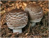 Fungi42B