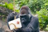 Photos made during the Sept. 23, 2006, Dallas Zoo Photo Safari