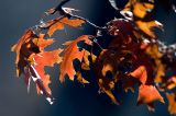 Late Fall Color  ~  October 14  [14]