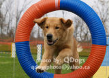 Agility Connection  Volunteer Trial  Oct 8