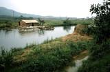 The Duck Farm