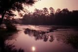 Forest Swamp Sunrise