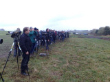 Black-throated Accentor - twitchers