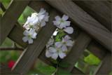 Challenge - Spring in the garden - 16