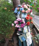 The tree the car hit, with new tributes put there today.