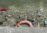 Floating rubbish at the north bank.