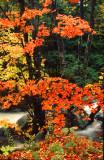 East Orange Autumn