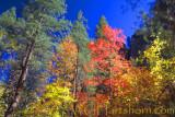 Autumn West Fork