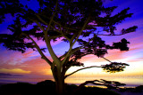 Carmel Cypress Sunset