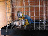 Ayia Napa - Blue and gold macaw