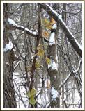 December 11 - Winter Color