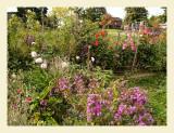 GardenFlowers7033.jpg