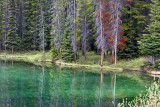 Trees and reflections, Herbert Lake