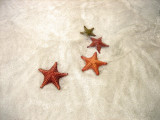 Cute Star Fish :)