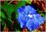 Blue flower_filtered.jpg