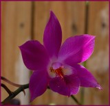 Purple Orchid D700.jpg