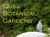 Quail Botanical Gardens - Macro Shooting Paradise