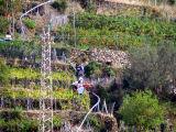 Loading grapes onto the trenino.
