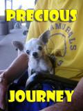Precious Journey: A Special Day Ride