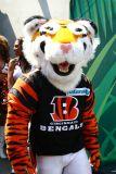 Cincinnati Bengals mascot Who-Dey