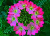 Viburnum Neon Wreath