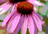 Cone Flower Poster