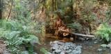 Little River Van Damme State Park Mendocino CA pano.jpg