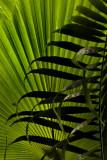 PBase meet at Kew Gardens: 6 July 2008