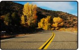 Cottonwoods on Highway 182