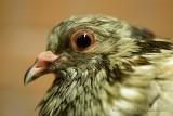 Bird ³¾