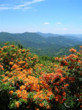 Roan Mountain, TN/NC - June 18, 2008
