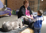 Mandy  with her Grey, Bianca, having an in depth conversation about Greyhounds with a young visitor.