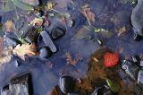 AutumnWater.jpg