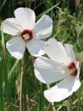 Closeup of white flowers