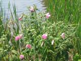 Flowers by the waterside