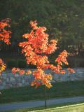 Fiery approach of Autumn