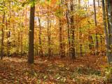 Spectacular woods