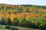 A swath of color