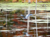 Gliding across the lake