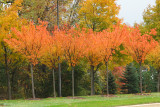 Colors of the young trees