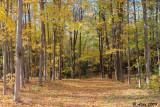 Autumn Woods 4_2009