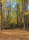 Autumn Woods 2009 5
