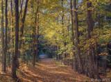 Autumn Woods 2009_ 7