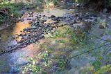 Woodland Stream in Fall 2